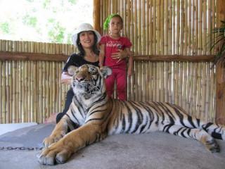 Male and female tigre for sale